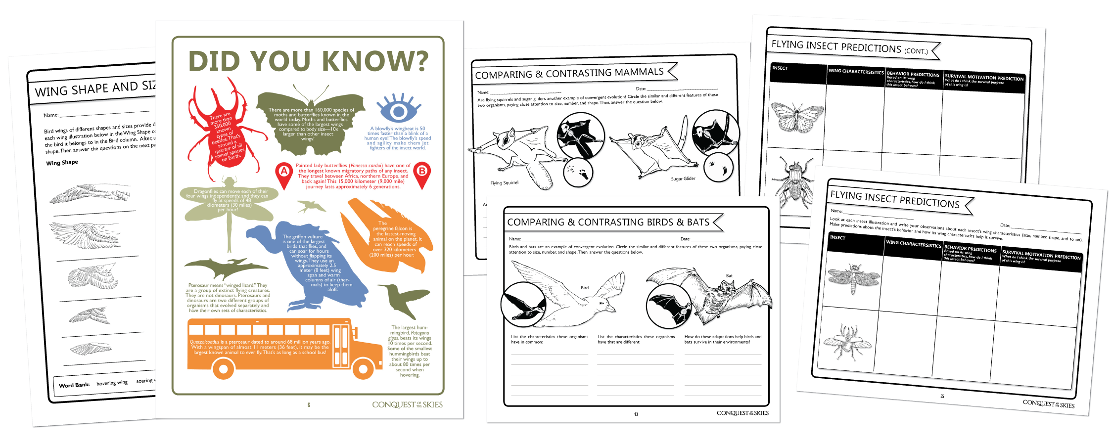 infographic-handouts